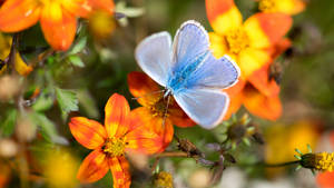Adonis Blue by jant-photo