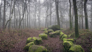 The Megalithic Grave