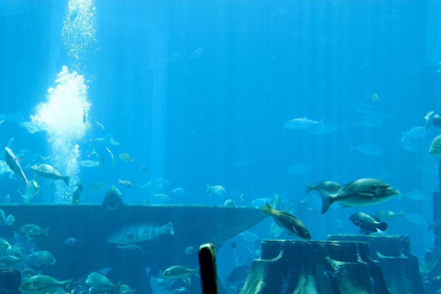 Dubai Atlantis Aquarium By Ashley Bubbles On Deviantart