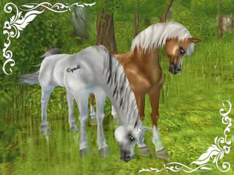 Arabian horse by Saiyoe