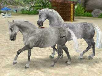 Starthorse by Saiyoe