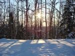 Snow Tree Shadows by Maxojir