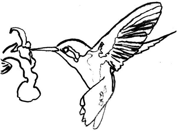 Line Art Hummingbird : Hummingbird lineart by merides on deviantart