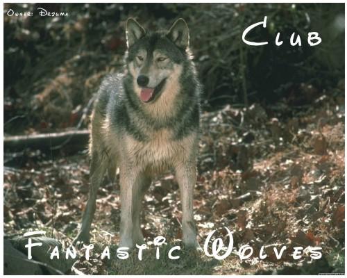 волк фото с высунутым языком.