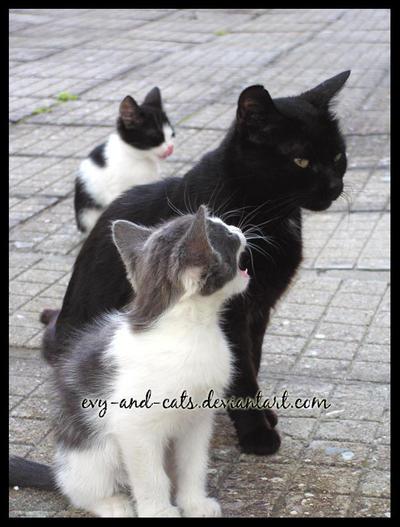 """Obrázek """"http://fc03.deviantart.com/fs22/i/2007/319/c/6/336_by_evy_and_cats.jpg"""" nelze zobrazit, protože obsahuje chyby."""