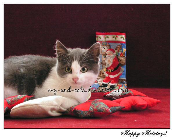 """Obrázek """"http://fc07.deviantart.com/fs22/i/2007/331/8/f/345_by_evy_and_cats.jpg"""" nelze zobrazit, protože obsahuje chyby."""