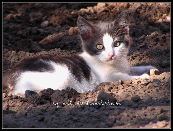 """Obrázek """"http://fc05.deviantart.com/fs22/i/2007/361/7/4/366_by_evy_and_cats.jpg"""" nelze zobrazit, protože obsahuje chyby."""