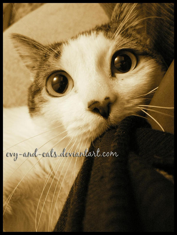 418 by evy-and-cats