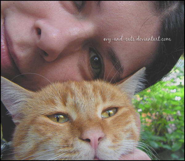 evy-and-cats's Profile Picture