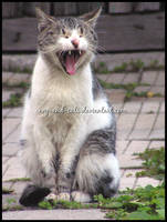 552 by evy-and-cats