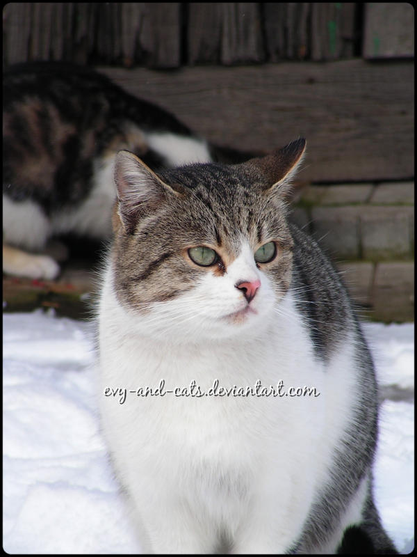 716 by evy-and-cats