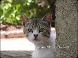 785 by evy-and-cats