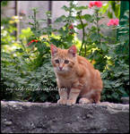793 by evy-and-cats