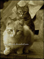 843 by evy-and-cats