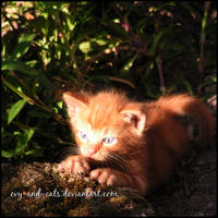 859 by evy-and-cats