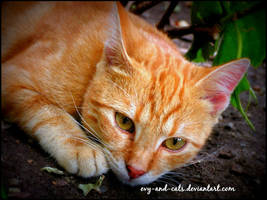 938 by evy-and-cats