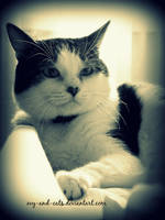 940 by evy-and-cats