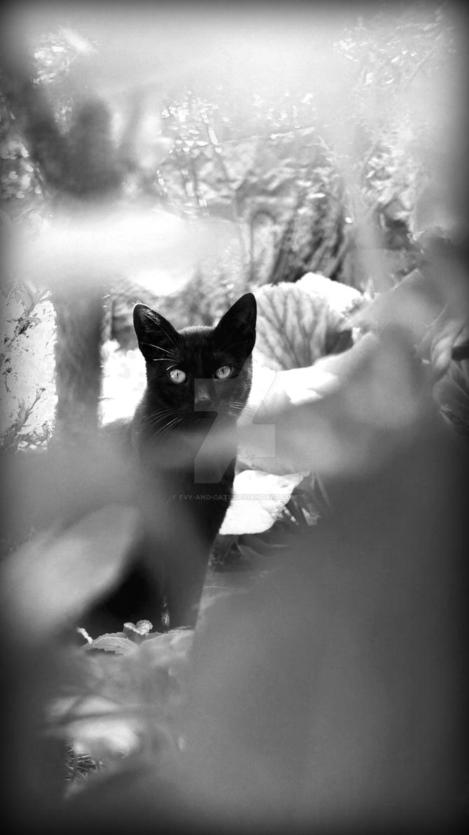 955 by evy-and-cats