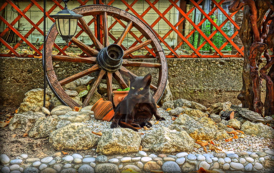 956 by evy-and-cats
