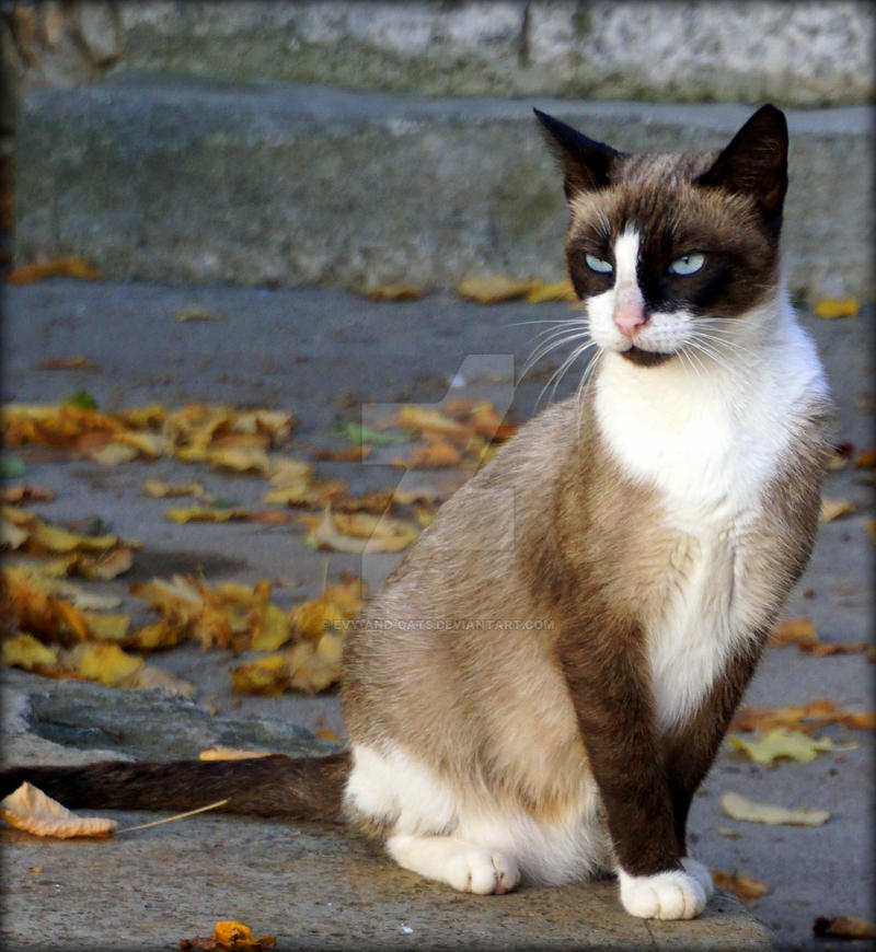 957 by evy-and-cats