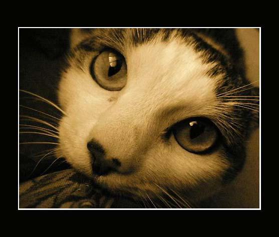 """Obrázek """"http://fc04.deviantart.com/fs10/i/2006/119/2/3/20_by_evy_and_cats.jpg"""" nelze zobrazit, protože obsahuje chyby."""