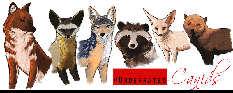 Image Gallery extinct canids
