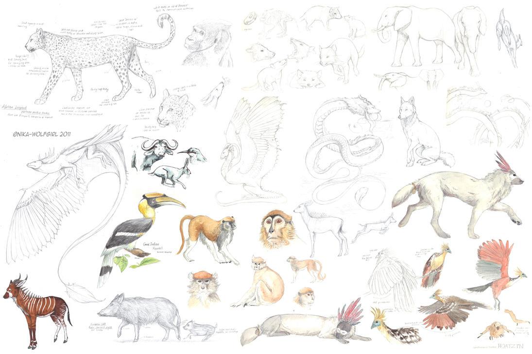 Indian Hornbill Drawing Great Indian Hornbill