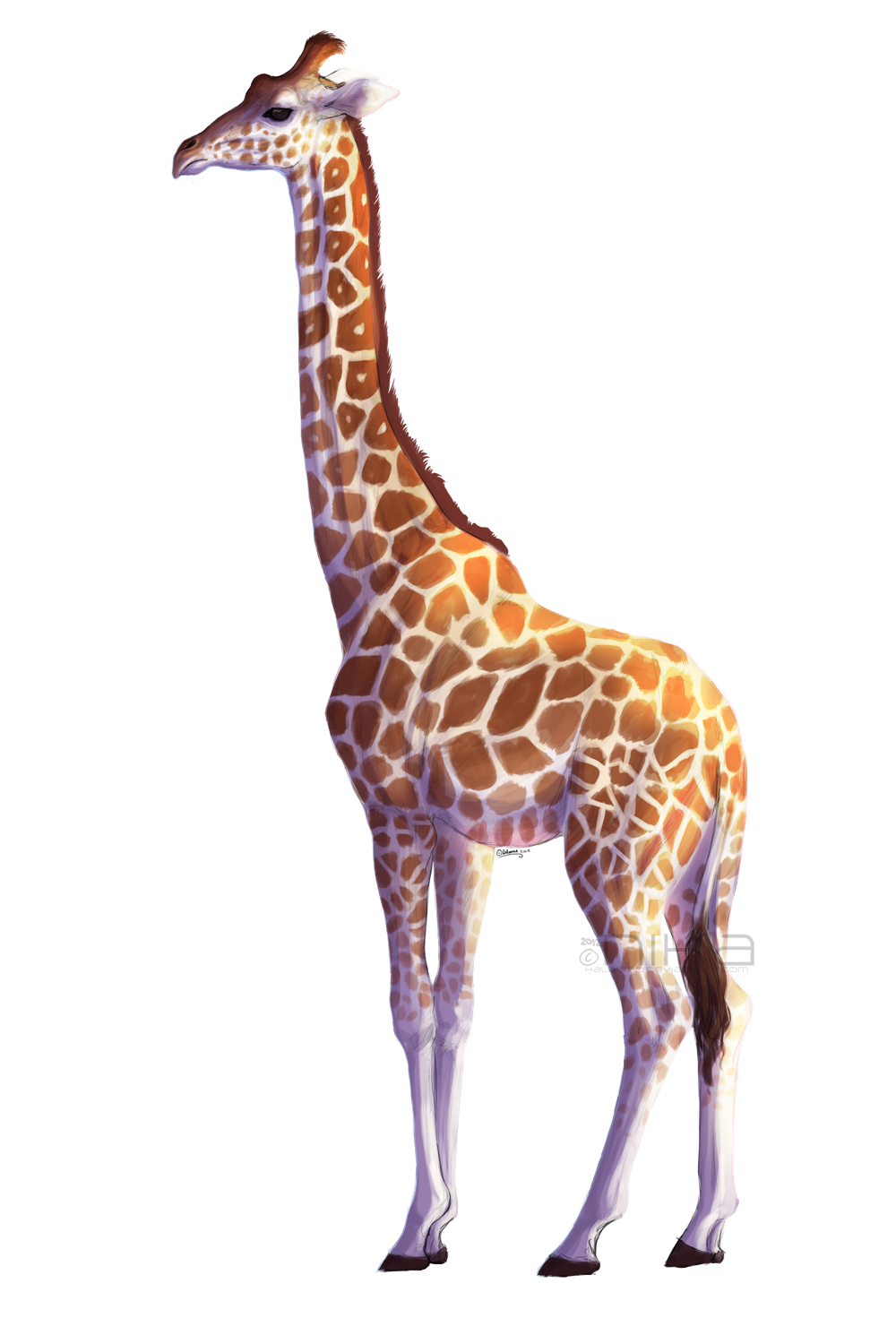 Giraffe by kalambo on DeviantArt