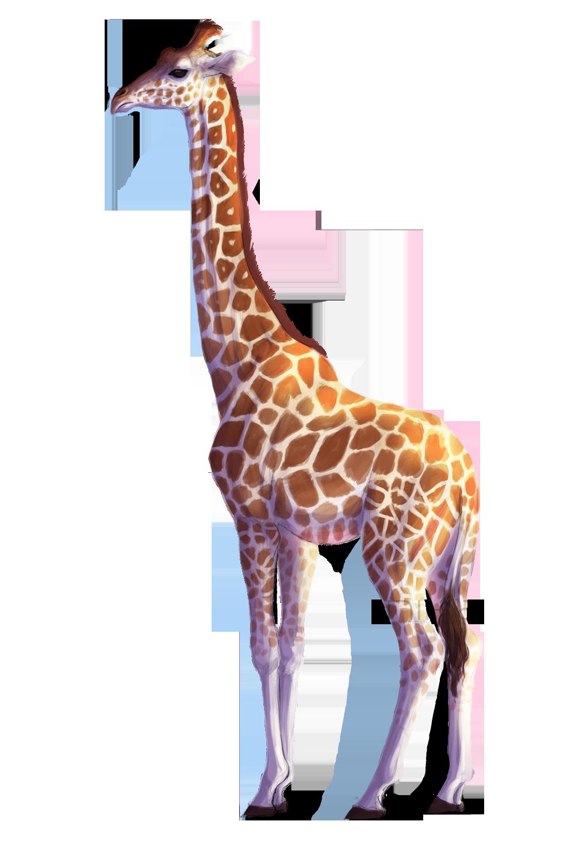 Drawing Of A Giraffe Tumblr | www.imgkid.com - The Image ...