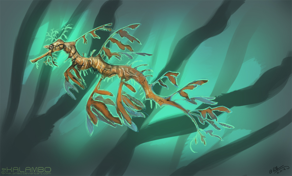 Leafy Sea Dragon by kalambo on DeviantArt
