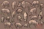 Wild Boar Studies by kalambo