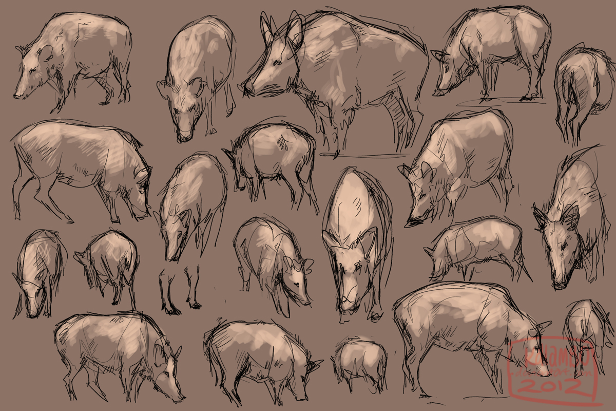 Wild Boar Studies by kalambo on DeviantArt