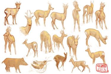 Deer studies by kalambo