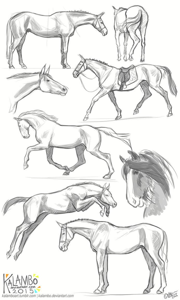 more horse studies by kalambo