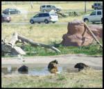 Bear Country USA 3