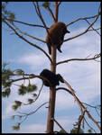 Bear Country USA 5