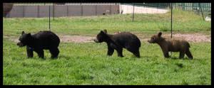 Bear Country USA 7