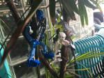 Tree Climbing V
