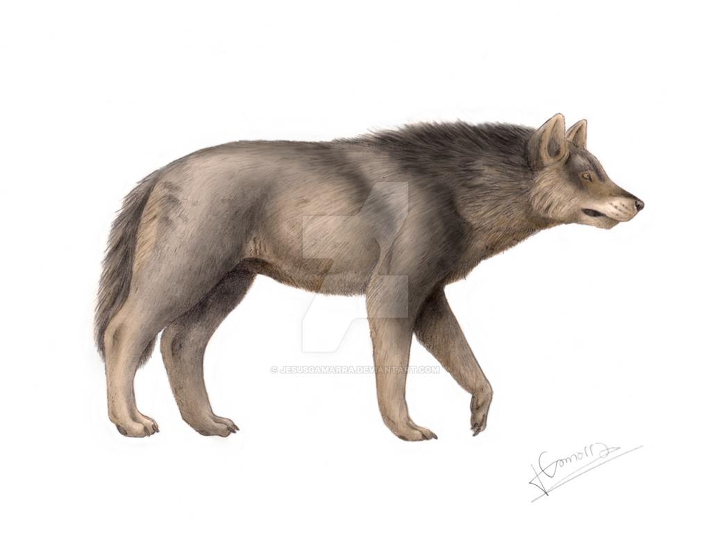 Canis dirus by jesusgamarra