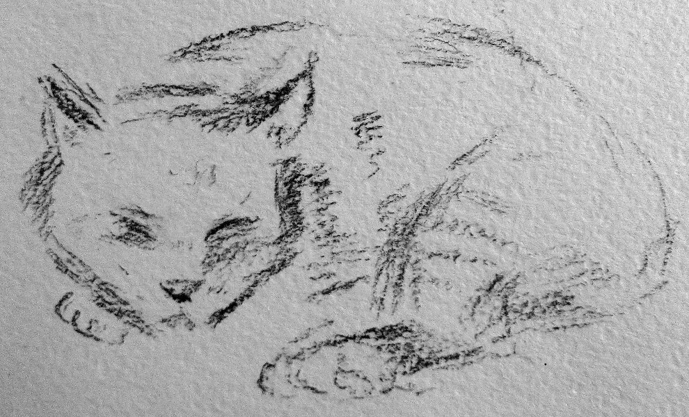 Cat by net-uash