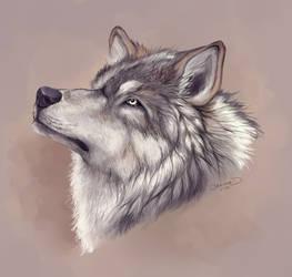 Realistic Wolf Head by Azenmaru