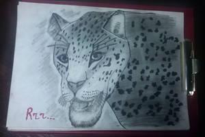 Hand Drawing  3