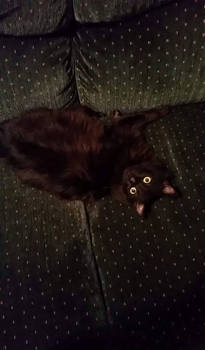 Oh Look at Me-I'm So Cute (We Got a New Cat)