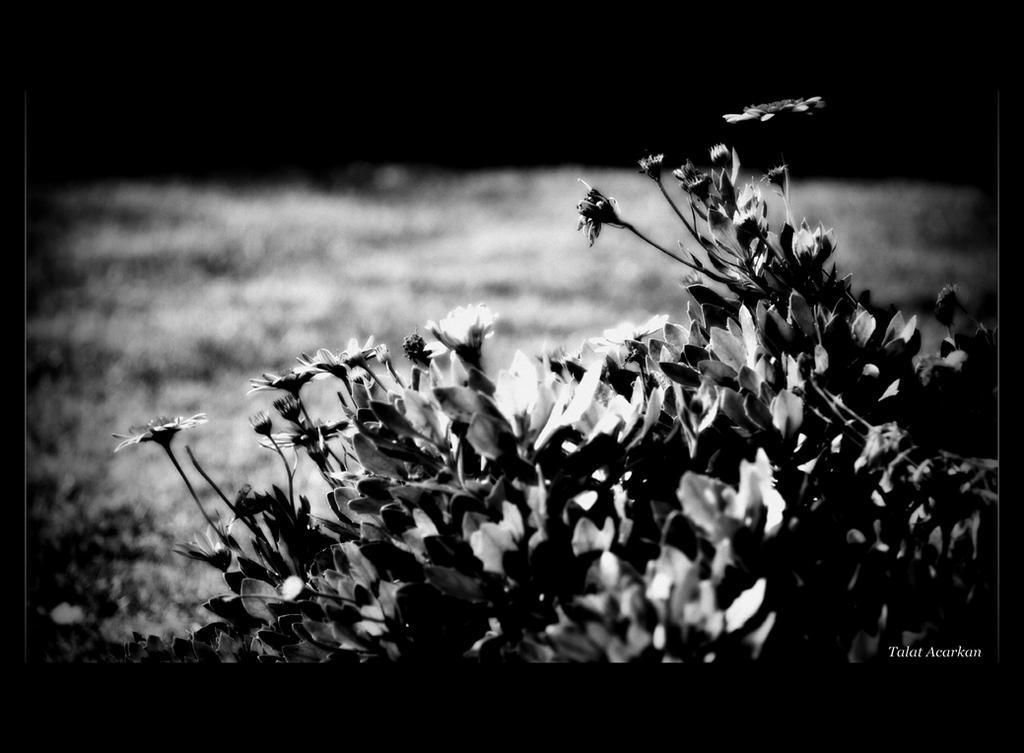 AUTUMN FLOWERS by mecengineer