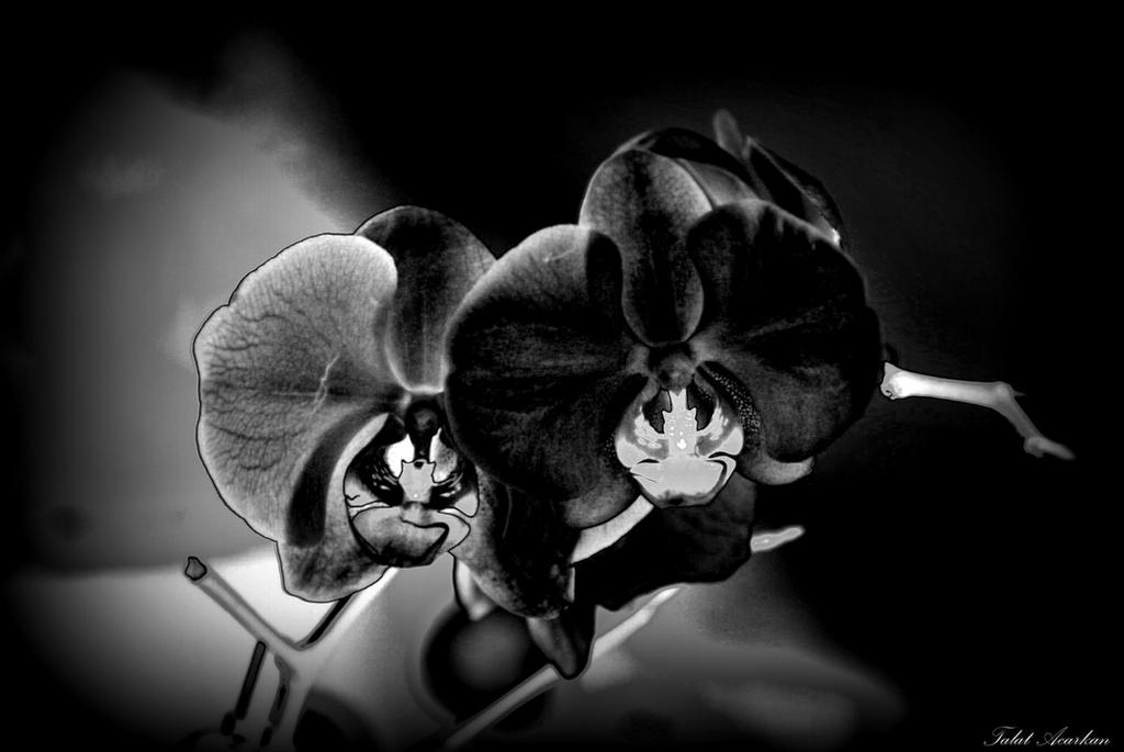 ORCHIDS by mecengineer