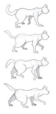 Cat Walk Cycle