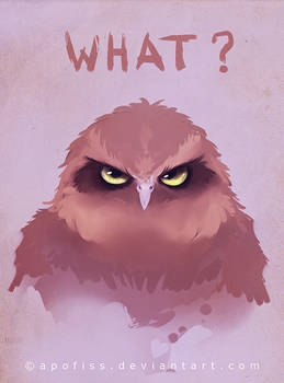 owl what