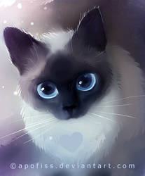 siamese by Apofiss