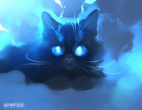 Fluffy Black Cat Background Hd