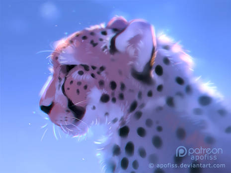 frosty cheetah